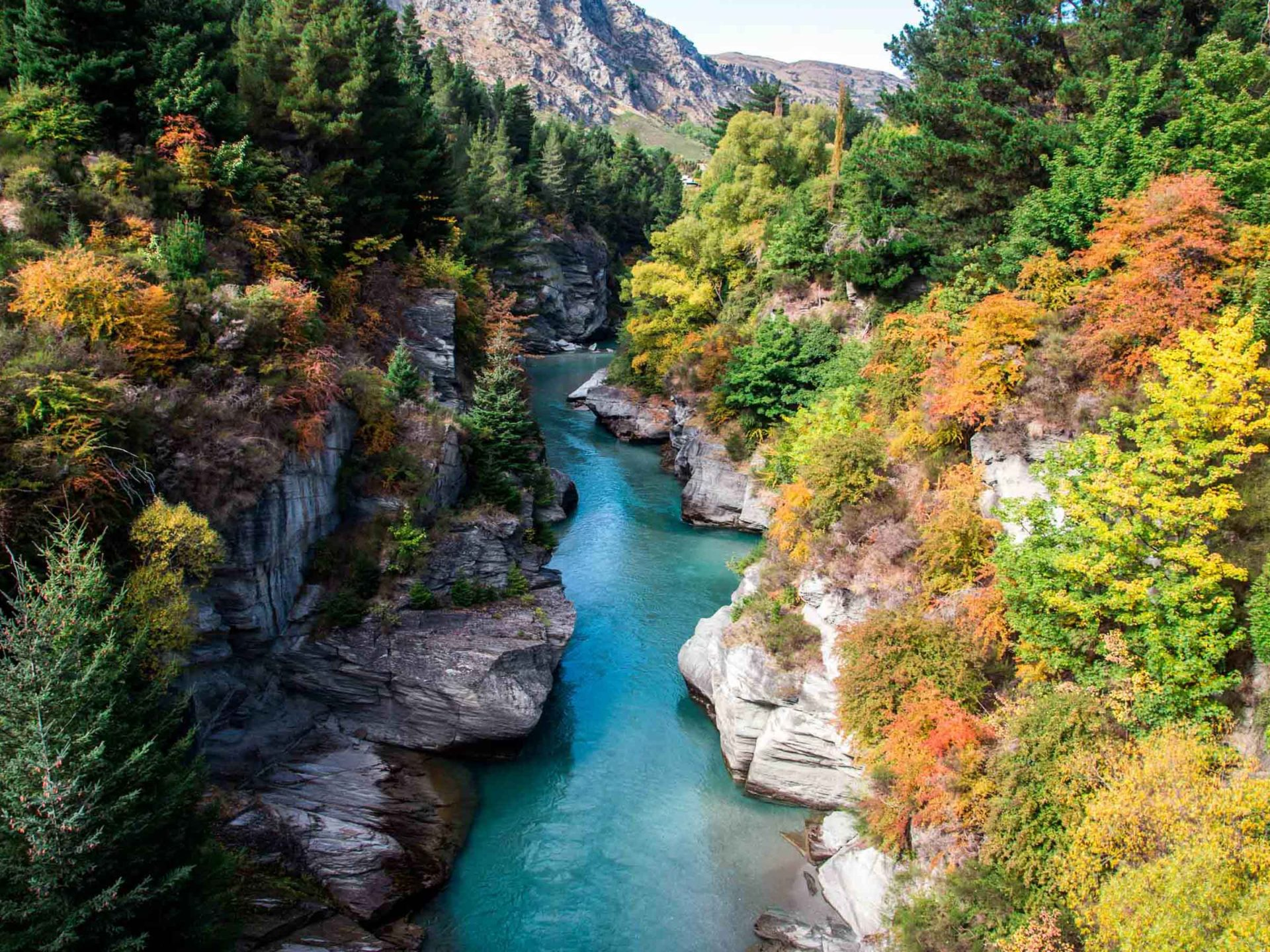 Fall Wallpaper Japan Shotover River In Autumn Queenstown New Zealand