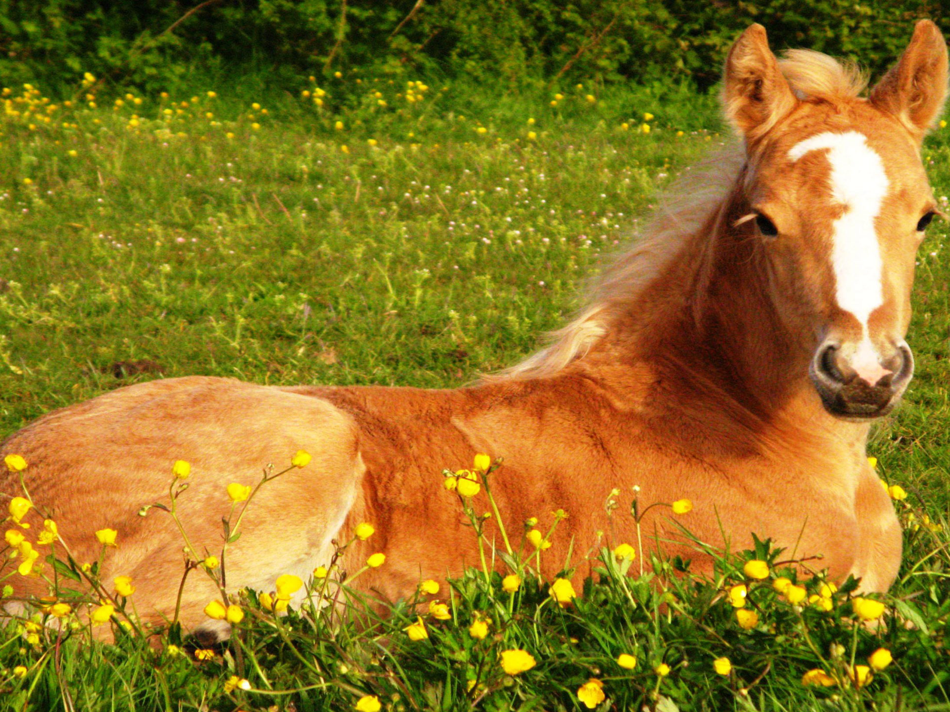 Cute Lock Screen Wallpaper For Ipad Small Cute Foal In A Green Grass Wallpaper Hd