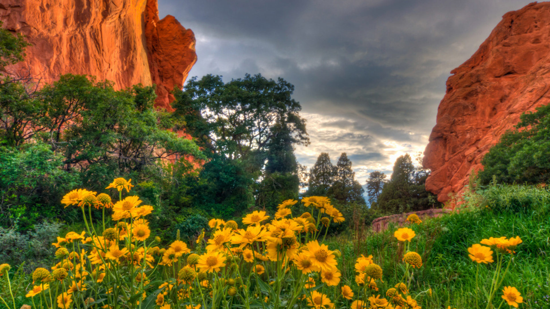 Fall Wallpaper Dual Monitor Spring Flowers In The Garden Of The Gods In Colorado