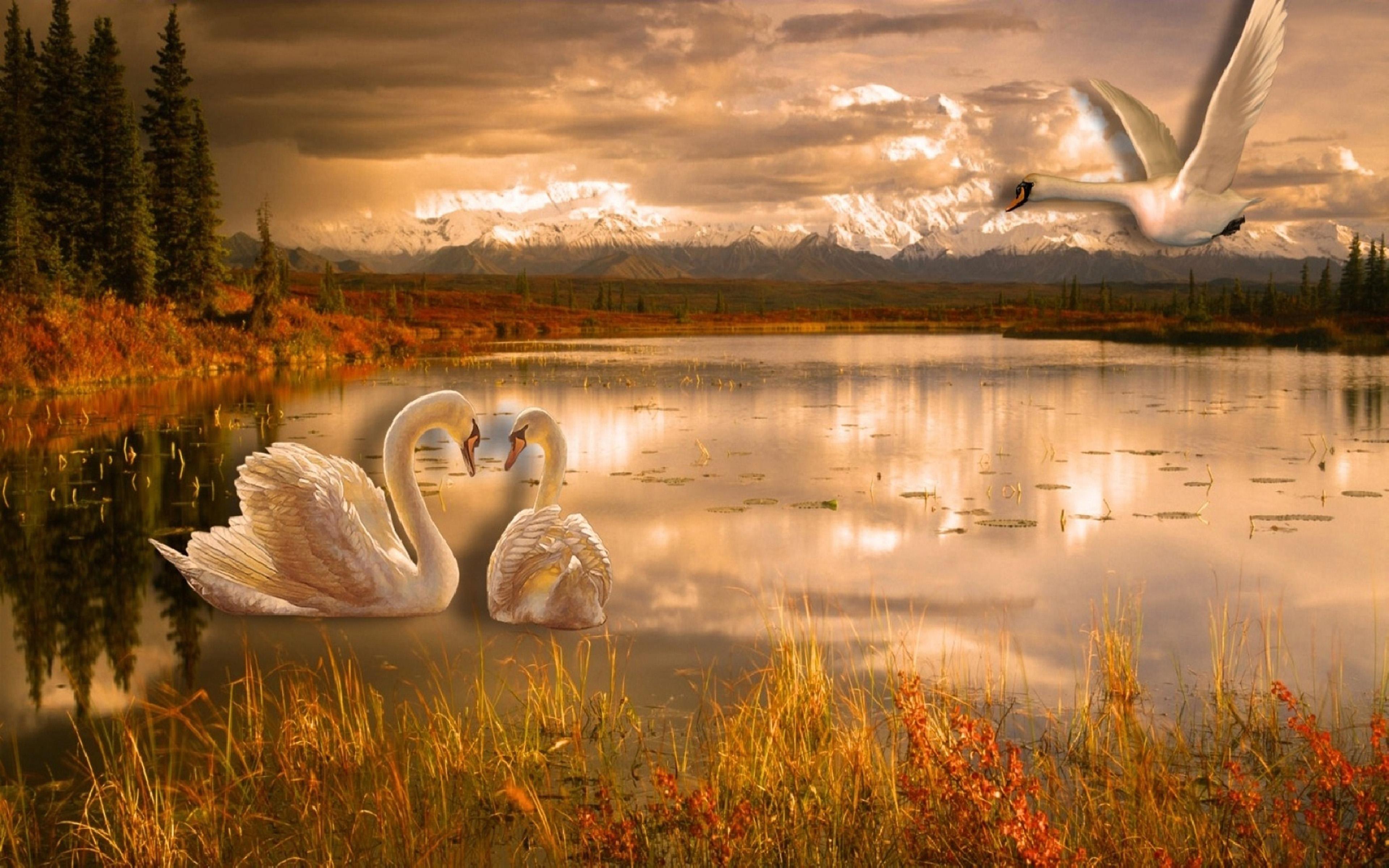Grey Iphone X Wallpaper Swan Lake Romance Desktop Wallpaper Hd 3840x2400