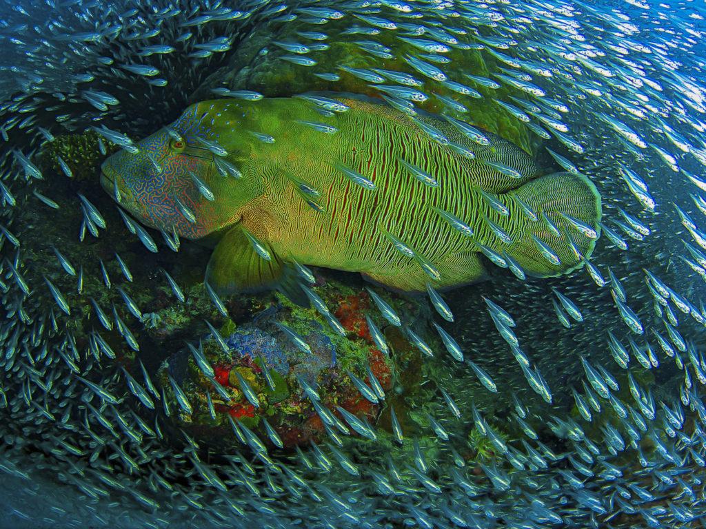 Hd Widescreen Christmas Desktop Wallpaper Underwater Photos Ocean Big Fish In The Company Of A