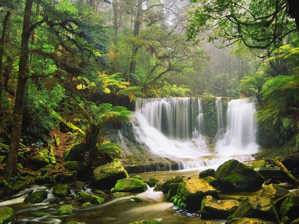 Batman Wallpaper Iphone X Waterfall Rocks Moss Green Forest Tree Fern Australian
