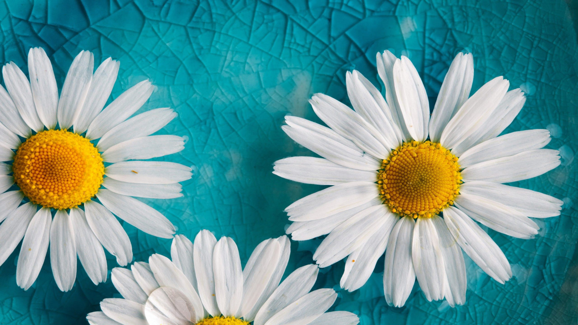 Iphone 5 Cracked Screen Wallpaper Yellow White Flowers Blue Cracked Glass Hd Wallpaper