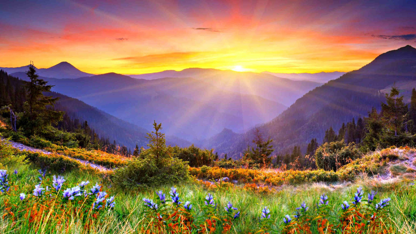 Awesome Sunset Sun Rays Forested Mountains Beautiful Mountain Flowers With Green Grass Desktop