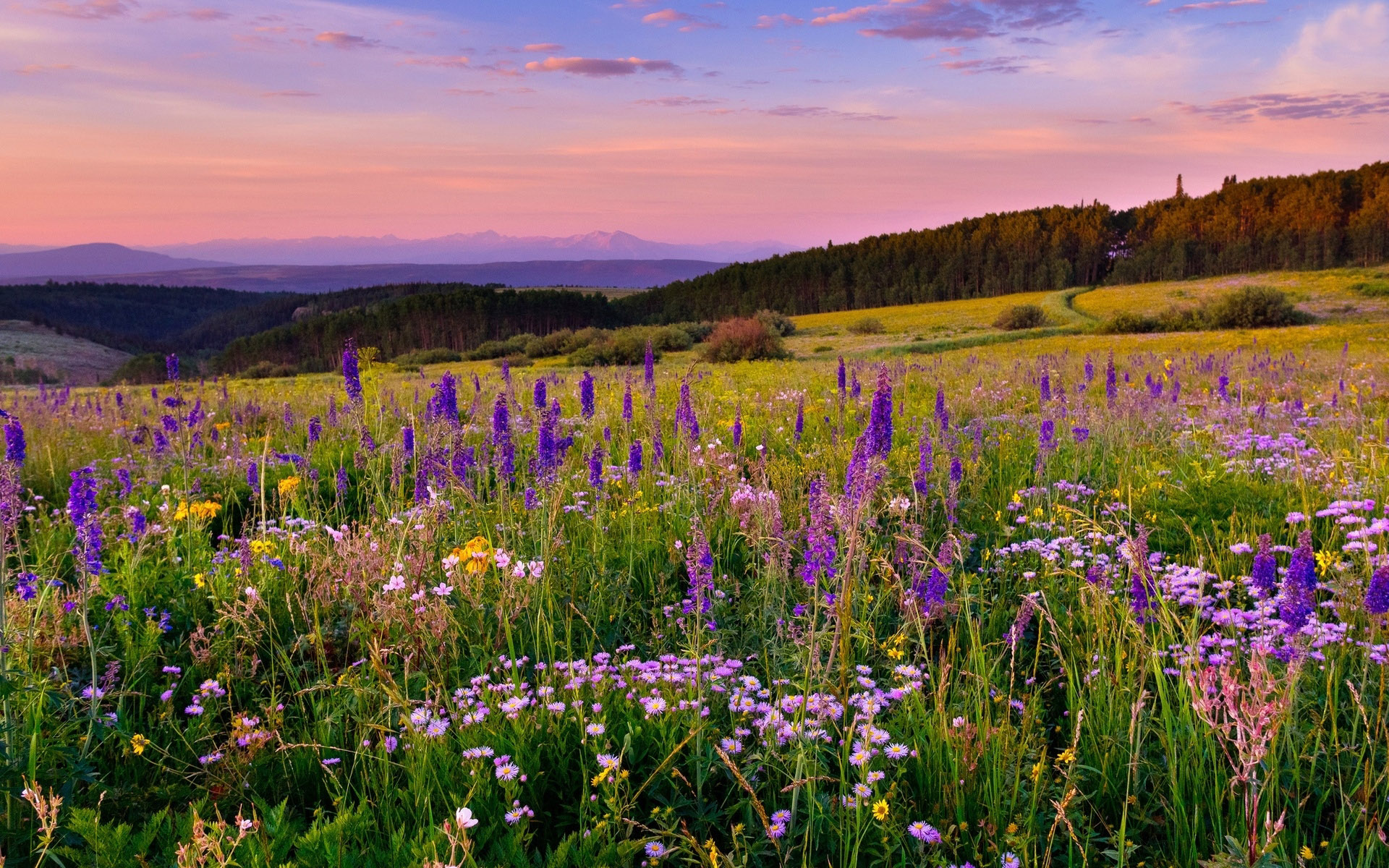 Fall Colored Background Wallpaper Meadow With Mountain Herbs In Different Colors Forest With
