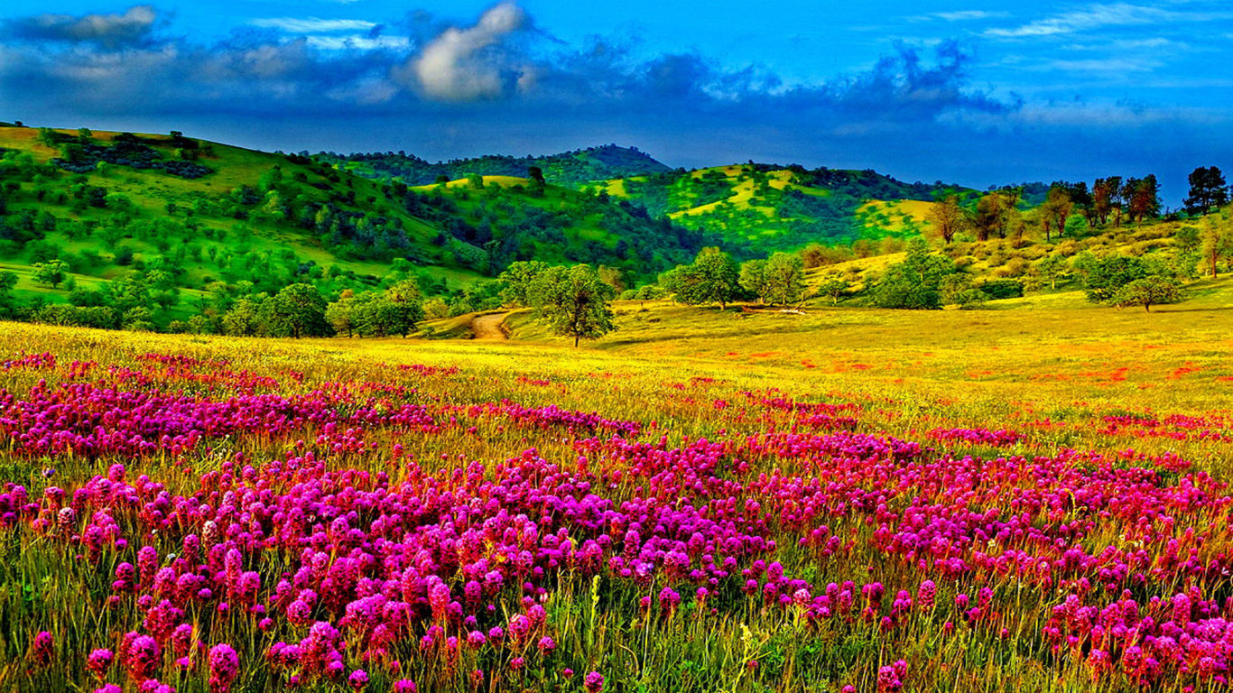 Fall Coastal Desktop Wallpaper Meadow With Purple Flowers Hills With Trees And Green