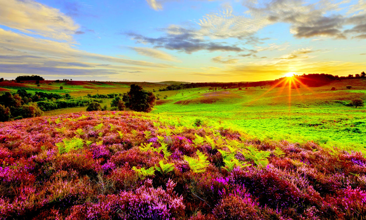 Iphone 5 Fall Wallpaper Nature Purple Flowers Green Grass Meadow With Sun Rays
