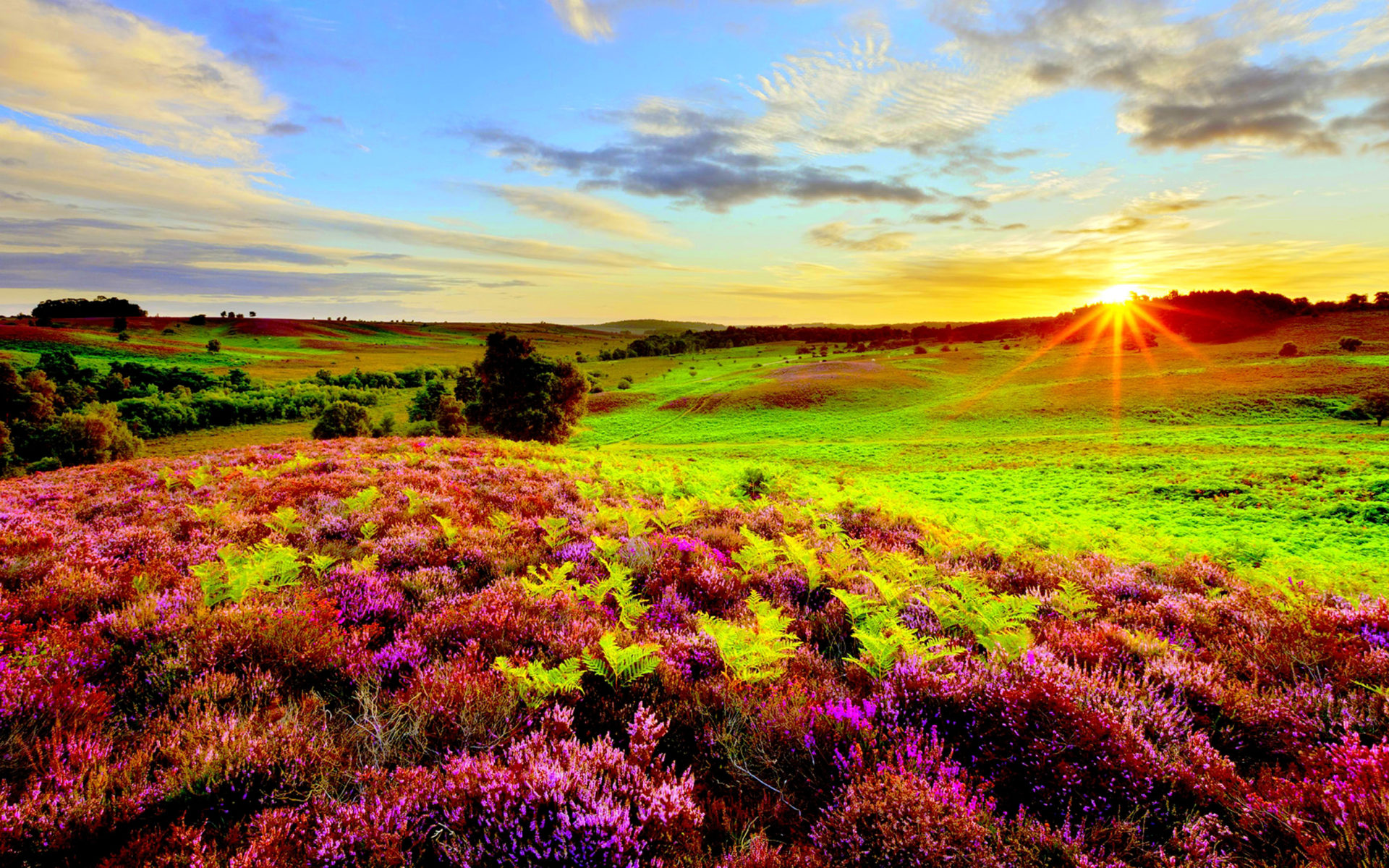 Colourful Wallpapers Hd For Android Nature Purple Flowers Green Grass Meadow With Sun Rays