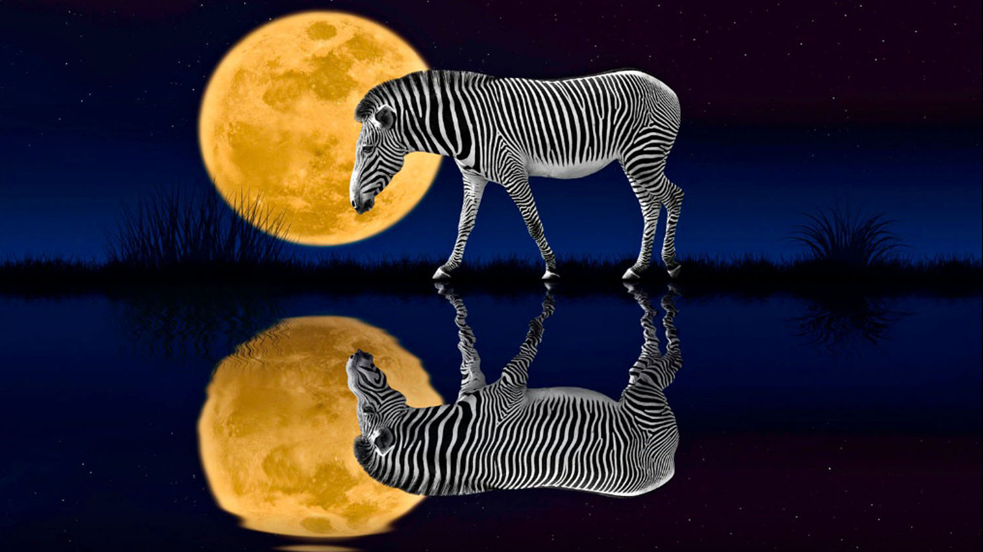 Cute Family Hd Wallpapers Night Zebra Full Moon Reflected In The Water Desktop