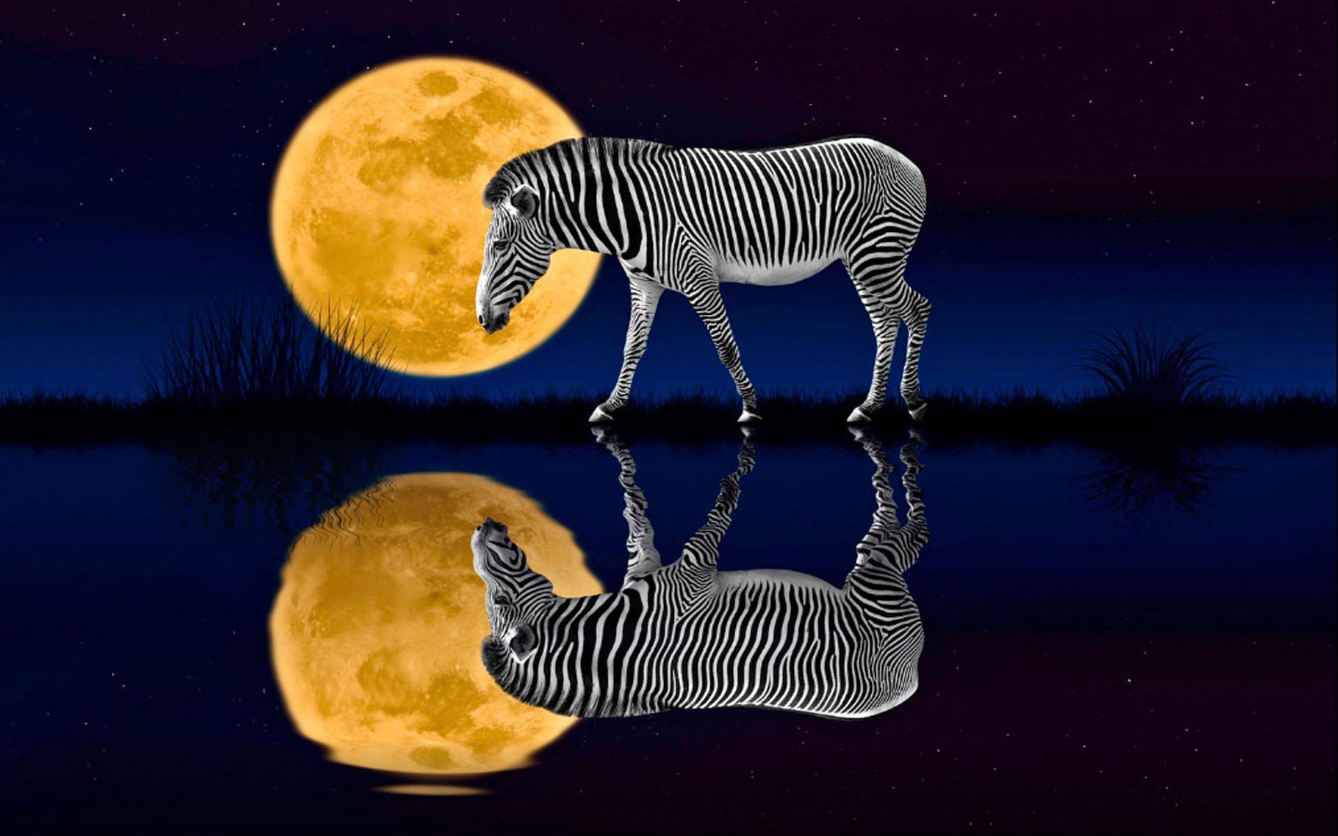 Cute Penguin Wallpaper Desktop Night Zebra Full Moon Reflected In The Water Desktop