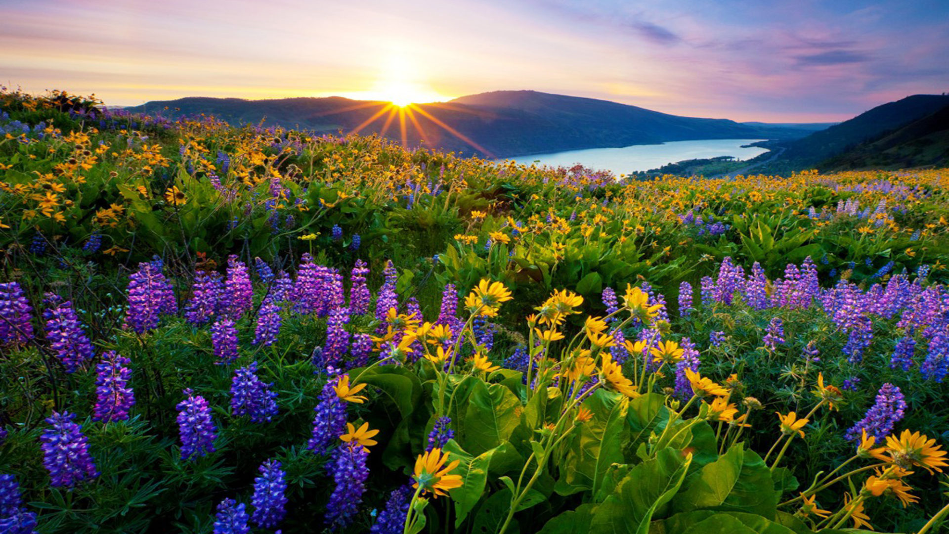 Late Fall Wallpaper Hd Sunrise Morning First Sun Rays Flowers Meadow With