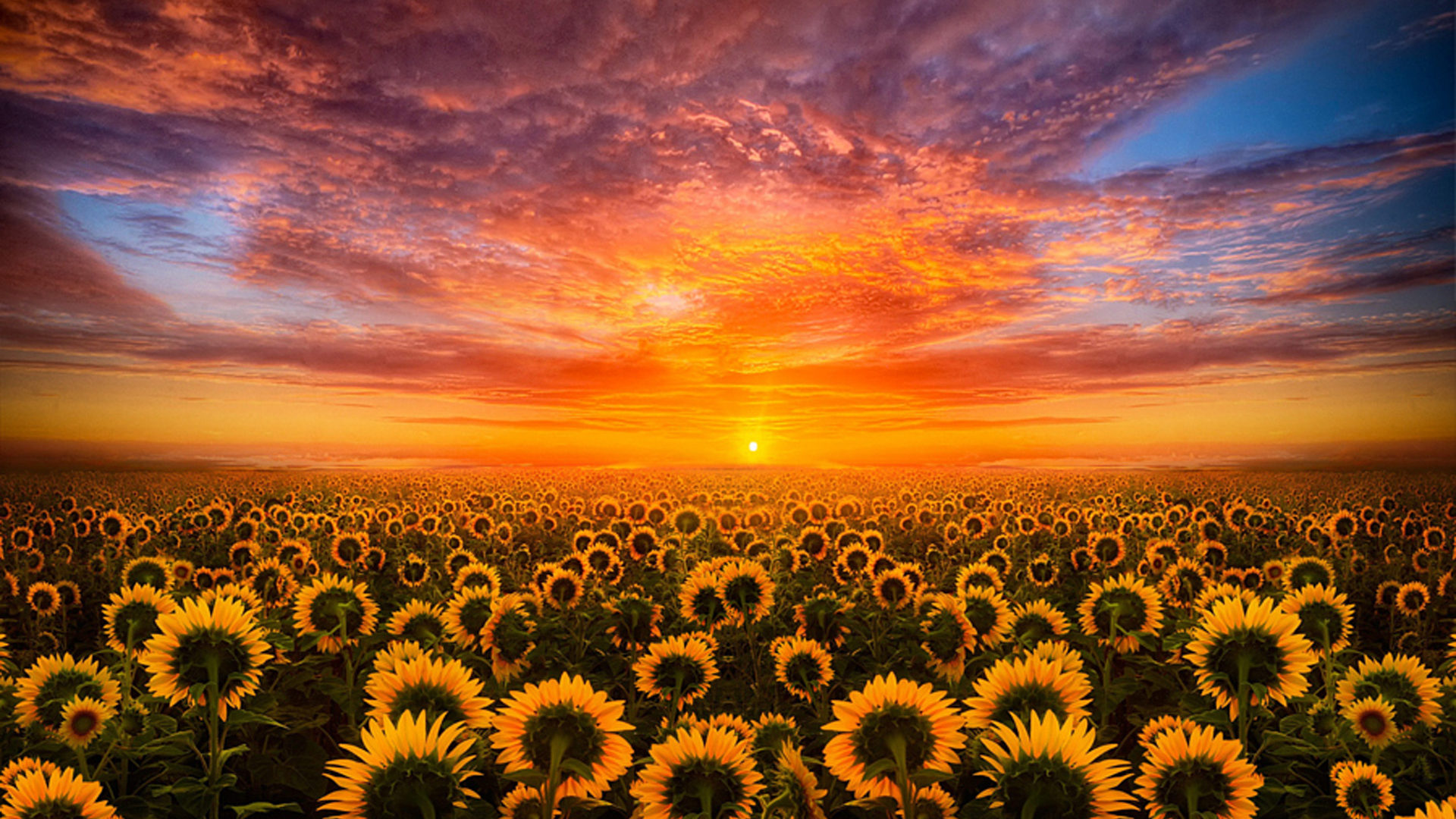 Create a unique look for your ios 14 home screen with these ideas for aesthetic backgrounds, icons, and phone wallpaper. Sunset Red Sky Cloud Field With Sunflower Hd Desktop