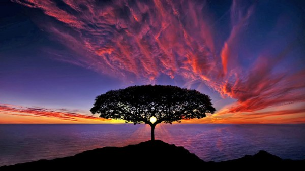 Tree Silhouette with Sunset