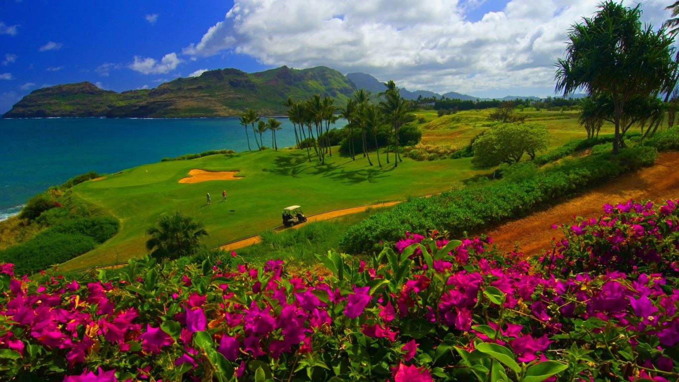 Hawaii Hd Wallpaper 1920x1080 Tropical Landscape Meadow With Green Grass Seapalm Trees