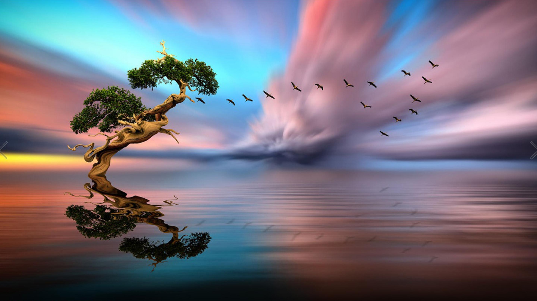Cute Gingerbread Wallpaper Solitary Tree Lake Birds In Flight Red Cloud Sunset