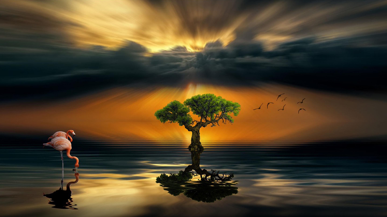 Dark Wood Iphone Wallpaper Sunset Dark Cloud Lake Alone Wood Flamingos Art Hd
