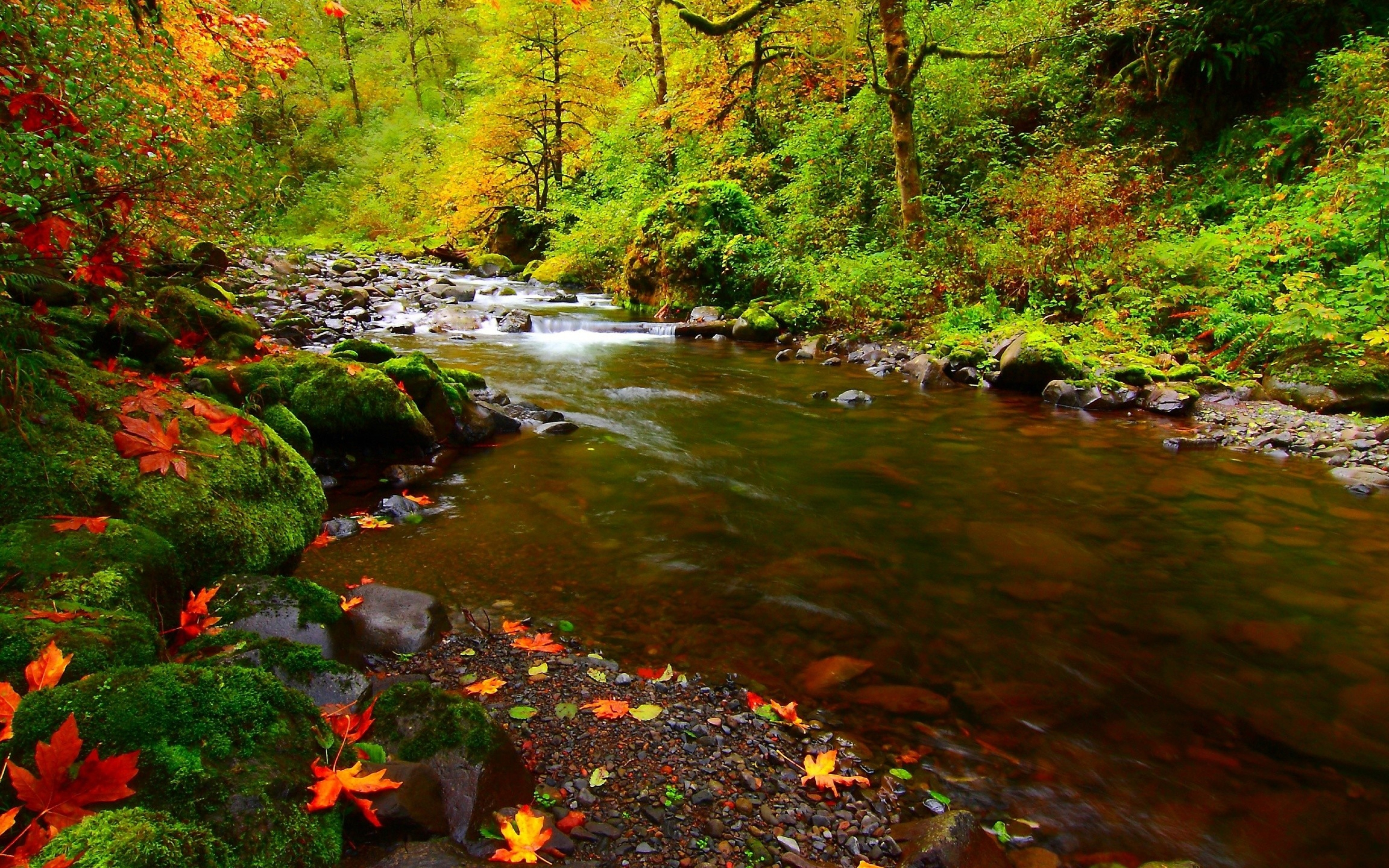 Cars Wallpapers In Full Hd Autumn Landscape Background River Stone Moss Green Red