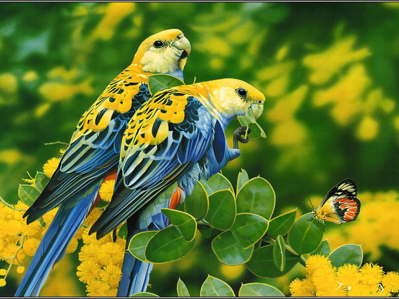 Free Animal Wallpapers For Android Birds Blue Yellow Parrots Butterfly Tree With Yellow