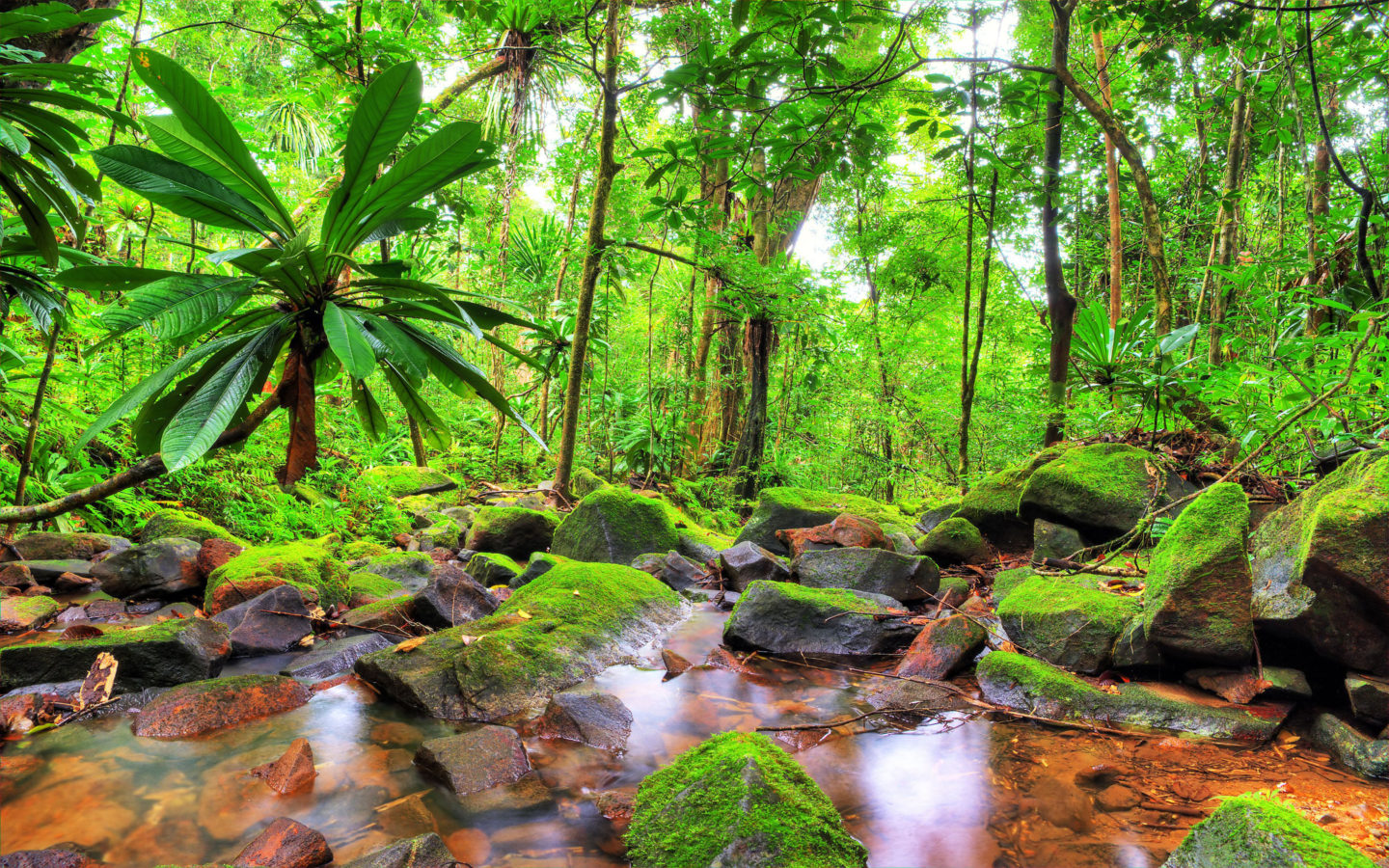 Falling Snow Wallpaper For Ipad Exotic Tropical Landscape Jungle Flow Stones Rocks With