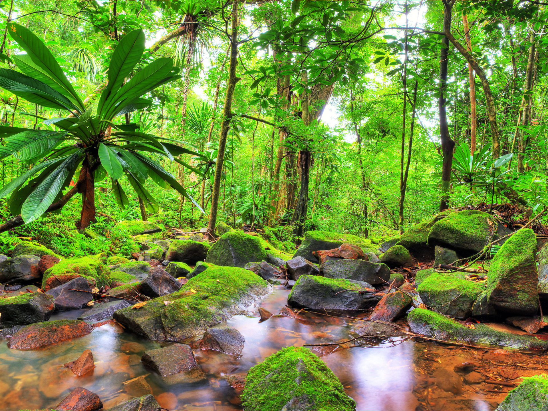 Disney Fall Desktop Wallpaper Exotic Tropical Landscape Jungle Flow Stones Rocks With