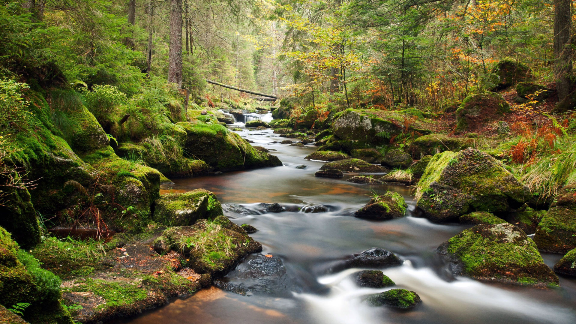 Kentucky Fall Wallpaper Mountain River Bank Of Rocks Covered With Green Moss Pine