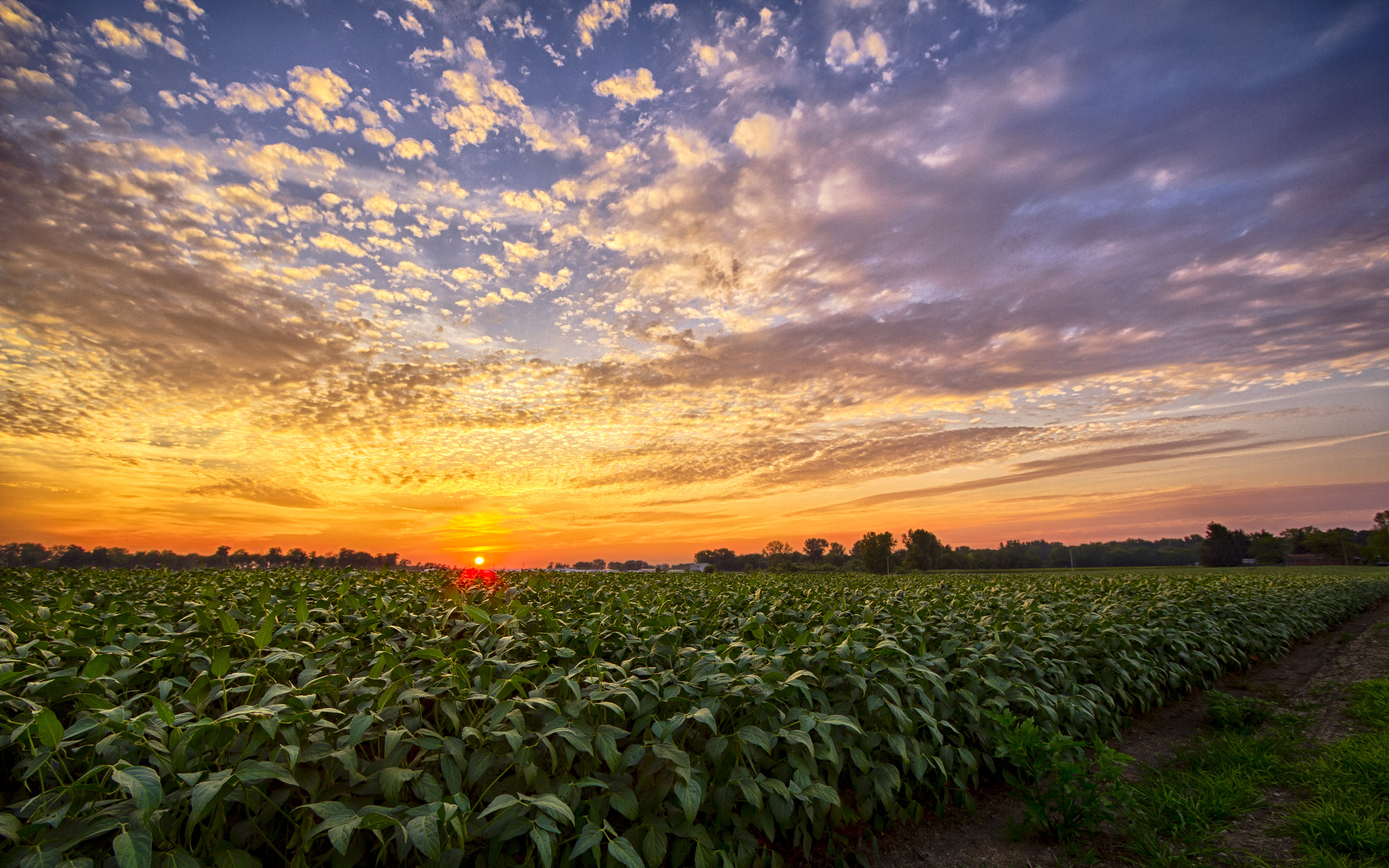Sunset In Indiana Bean Field South Of Milford Indiana Hd