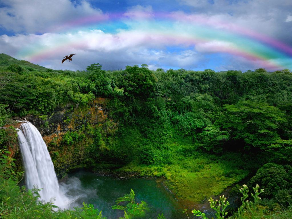 Fall Flowers Wallpaper Backgrounds Top View Of A Beautiful Waterfall In Hawaii Wallpapers13 Com