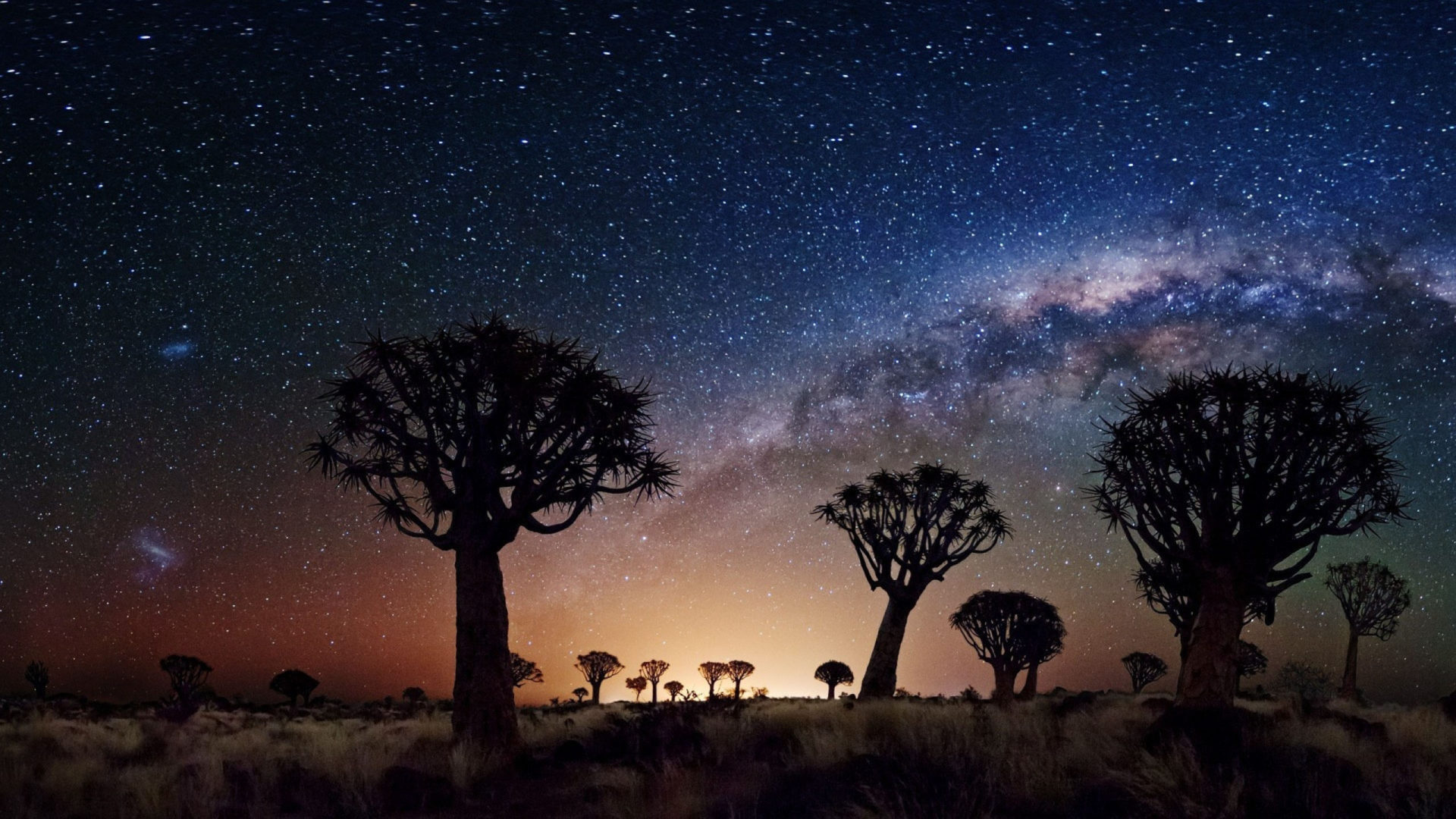 Free Wallpaper Fall Flowers Night Landscape The Milky Way Trees Desert Area In Night