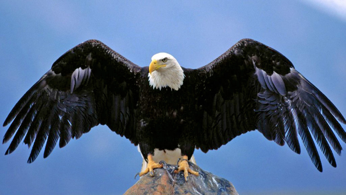 Bald Eagle Spread Wings Desktop Hd Wallpaper For Pc Tablet And Mobile Download 1920x1200