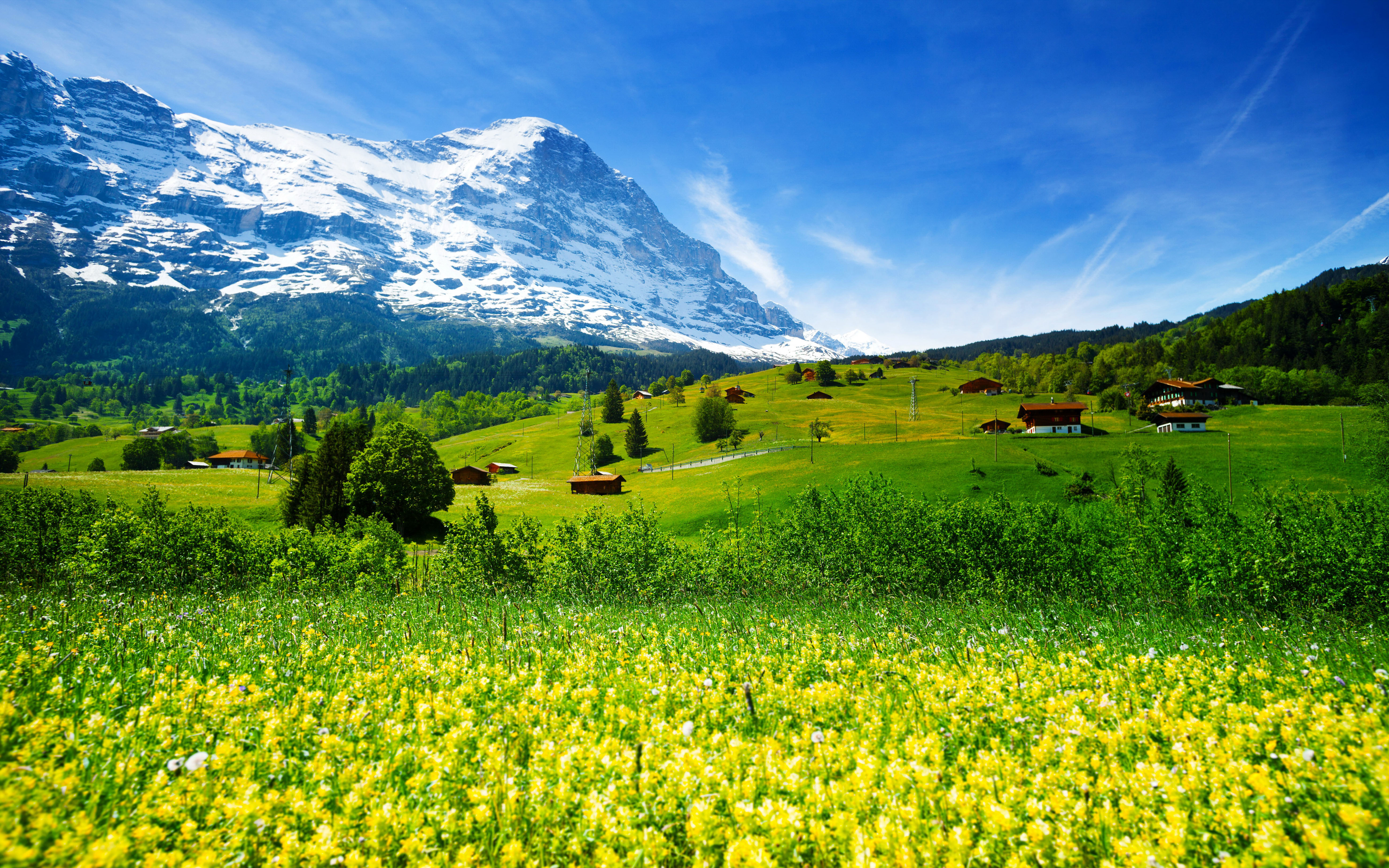 Spring Landscape Nature Switzerland Meadow With Yellow Flowers And Green Grass Mountainous Villages Snowy Mountains Desktop Hd Wallpaper For Pc ...
