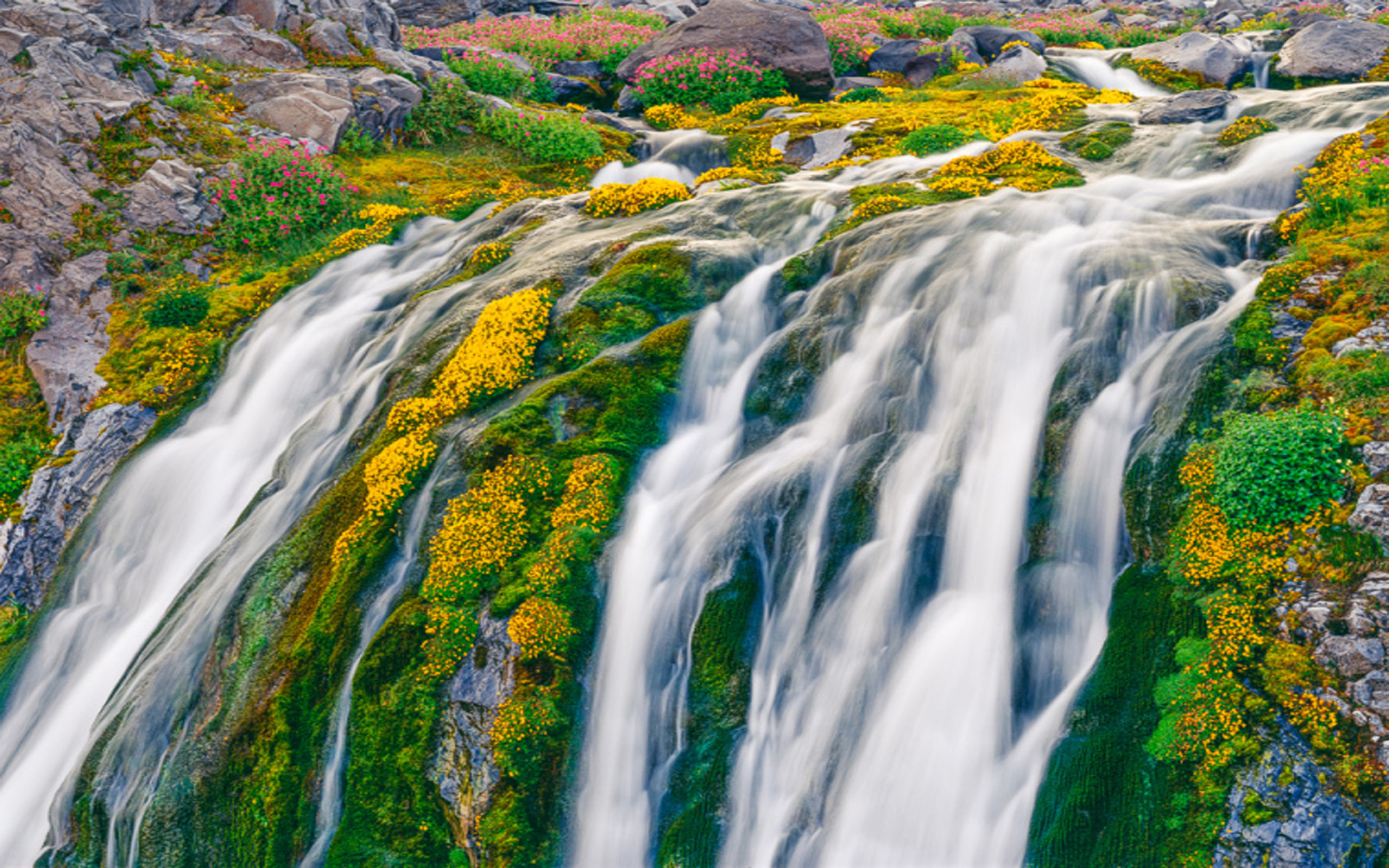 Fall Flowers Wallpaper For Desktop Waterfall In Spring Yellow And Pink Flowers In Mount