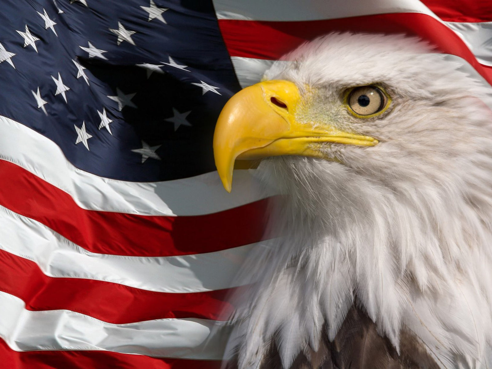 American Flag Wallpaper Iphone X American Flag And Bald Eagle Symbol Of America Picture Hd