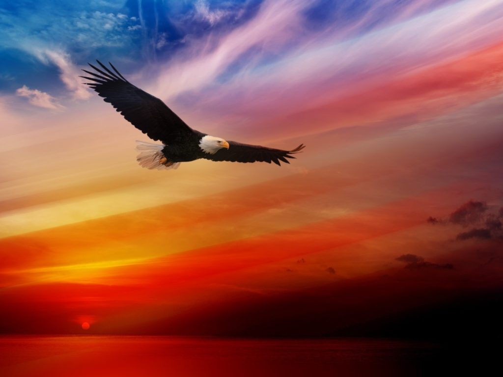 Fall Wallpapers For Tablet Bald Eagle Flying At Sunset Red Sky Desktop Hd Wallpaper
