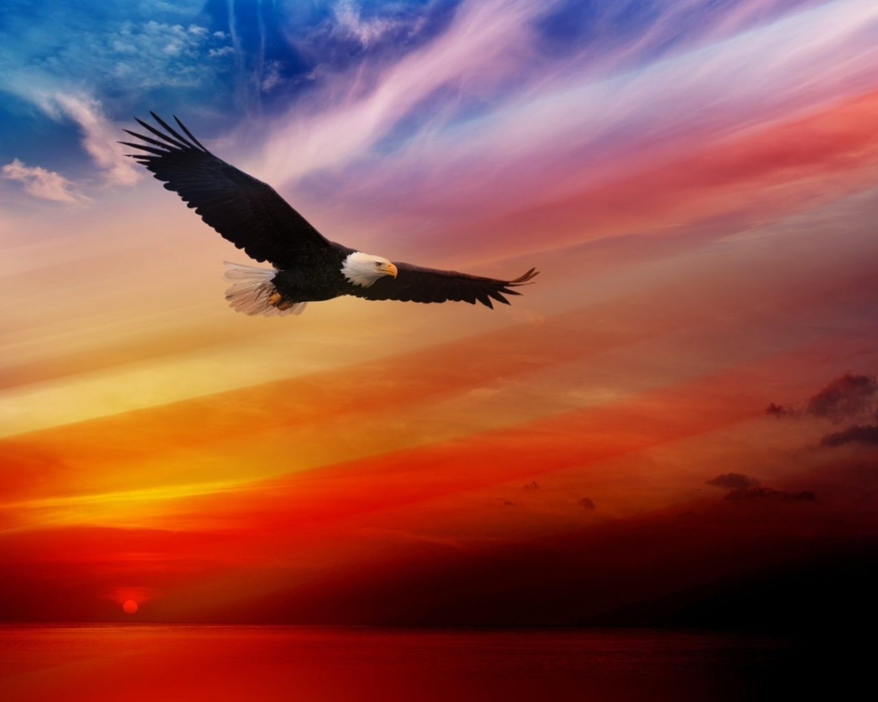 Can You Get Moving Wallpapers For Iphone X Bald Eagle Flying At Sunset Red Sky Desktop Hd Wallpaper