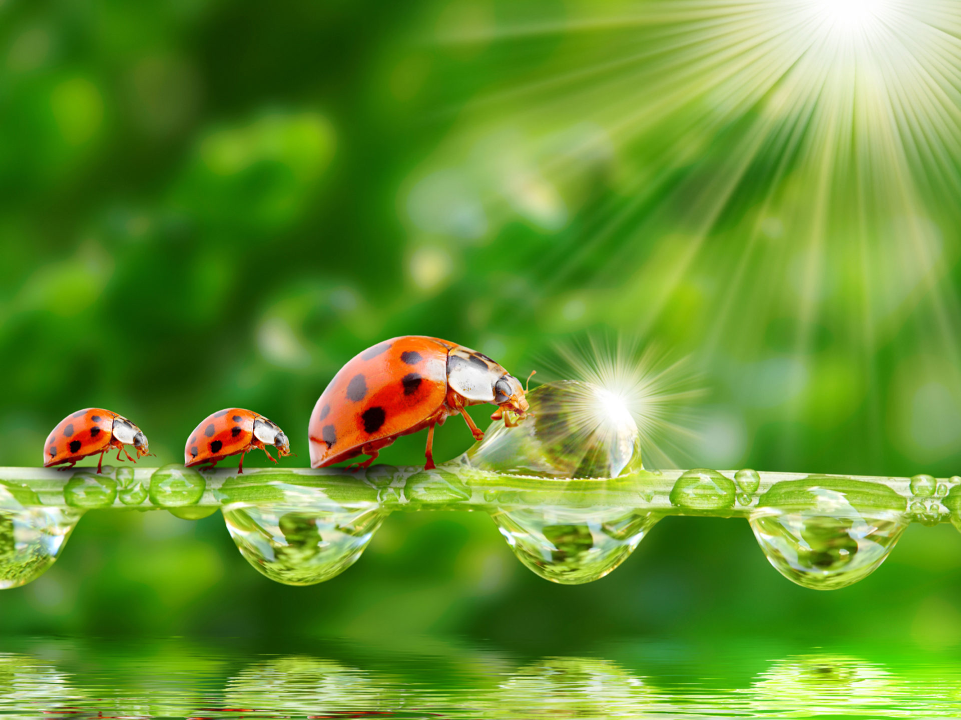 Raindrop Wallpaper Iphone X Ladybug Sun Rays Grass Morning Dew Drops Water Wallpaper