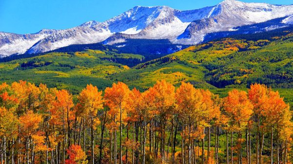 Autumn Colorado Fall Snowy Mountains Nature Landscape Hd Wallpaper 1920x1200
