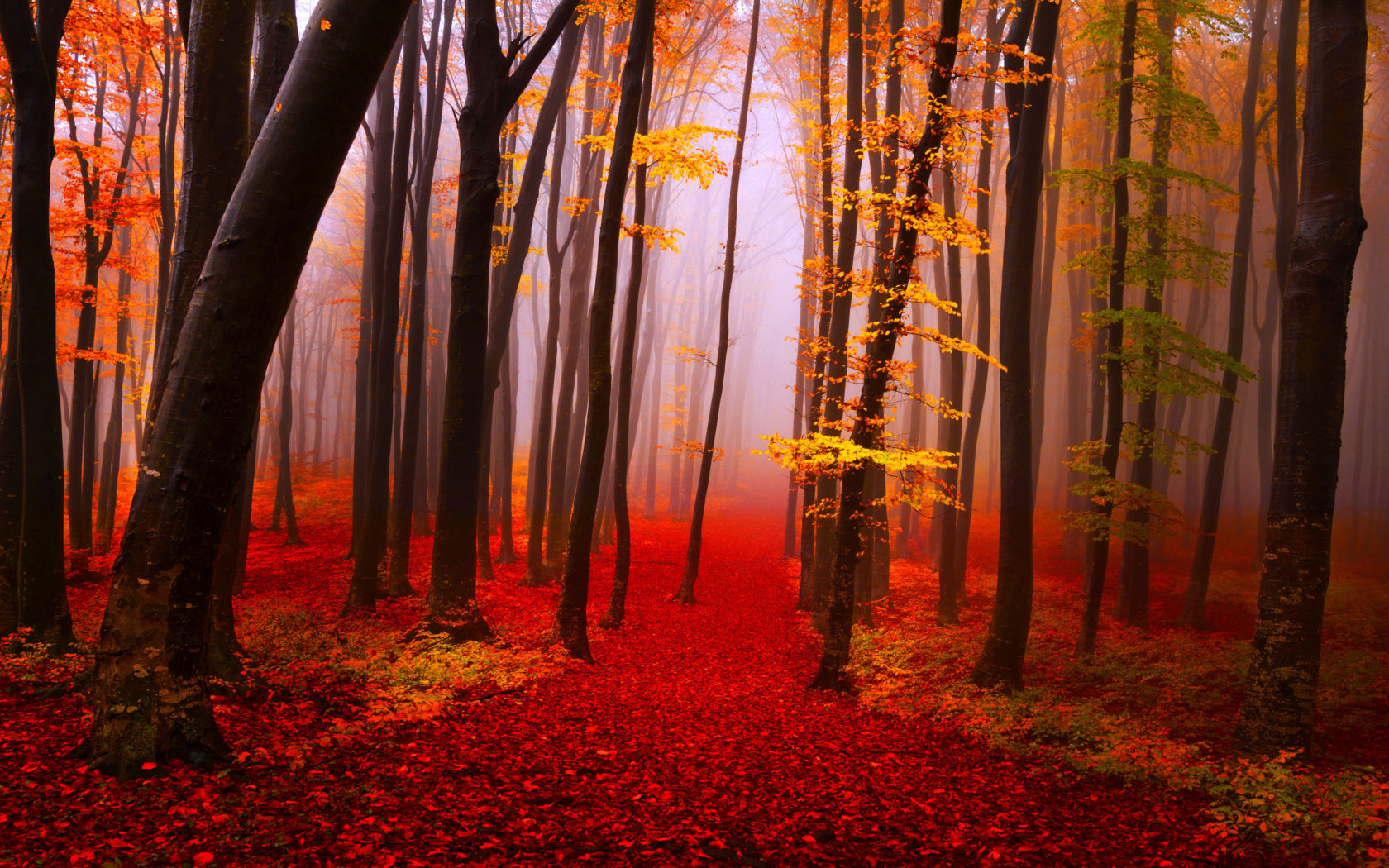 Free Computer Wallpaper Fall Leaves Autumn Forest Path Trees Fog Fall Yellow And Red Leaves