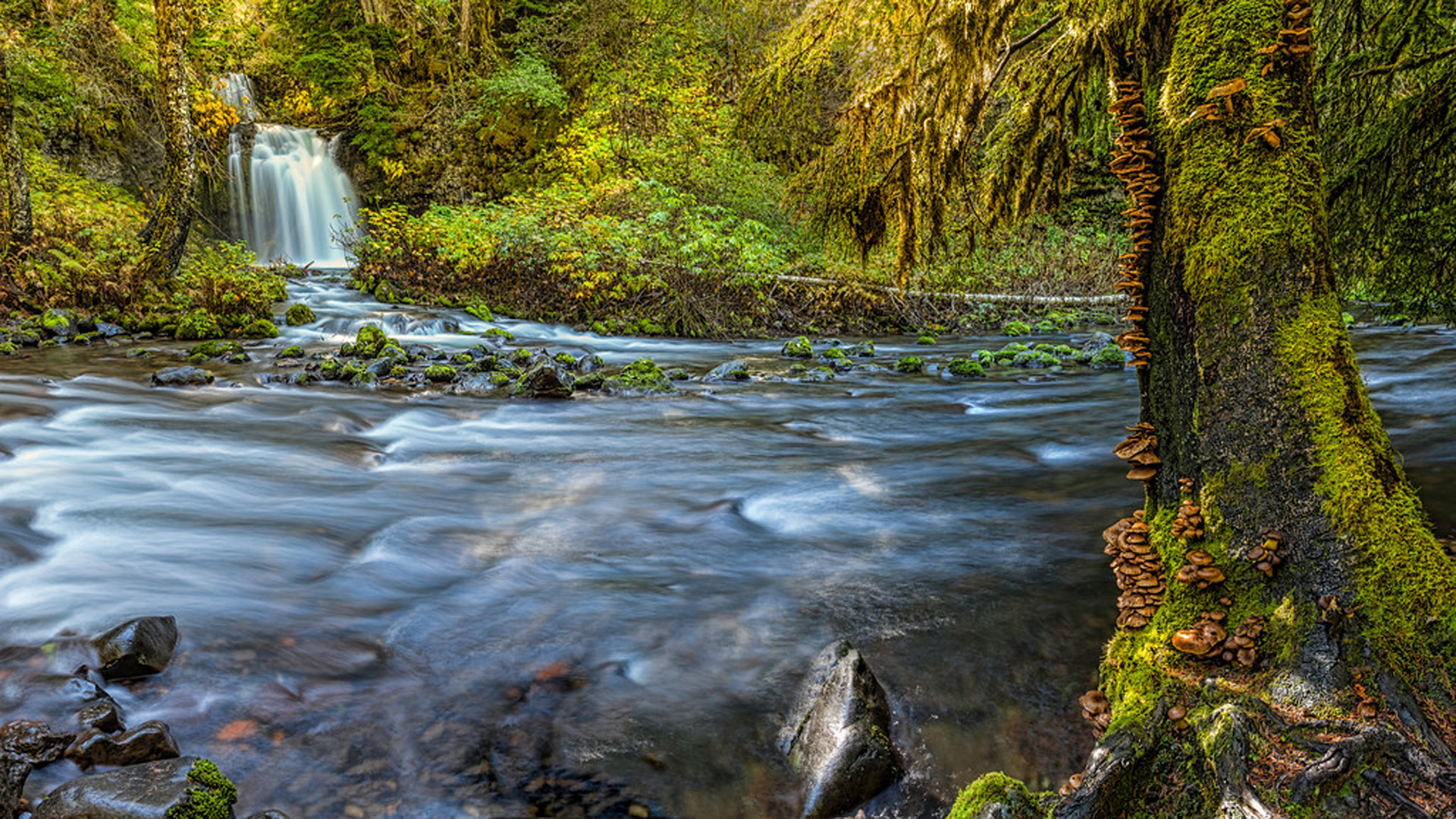 Fall Pc Wallpaper Free Gifford Pinchot National Forest National Park And Lewis