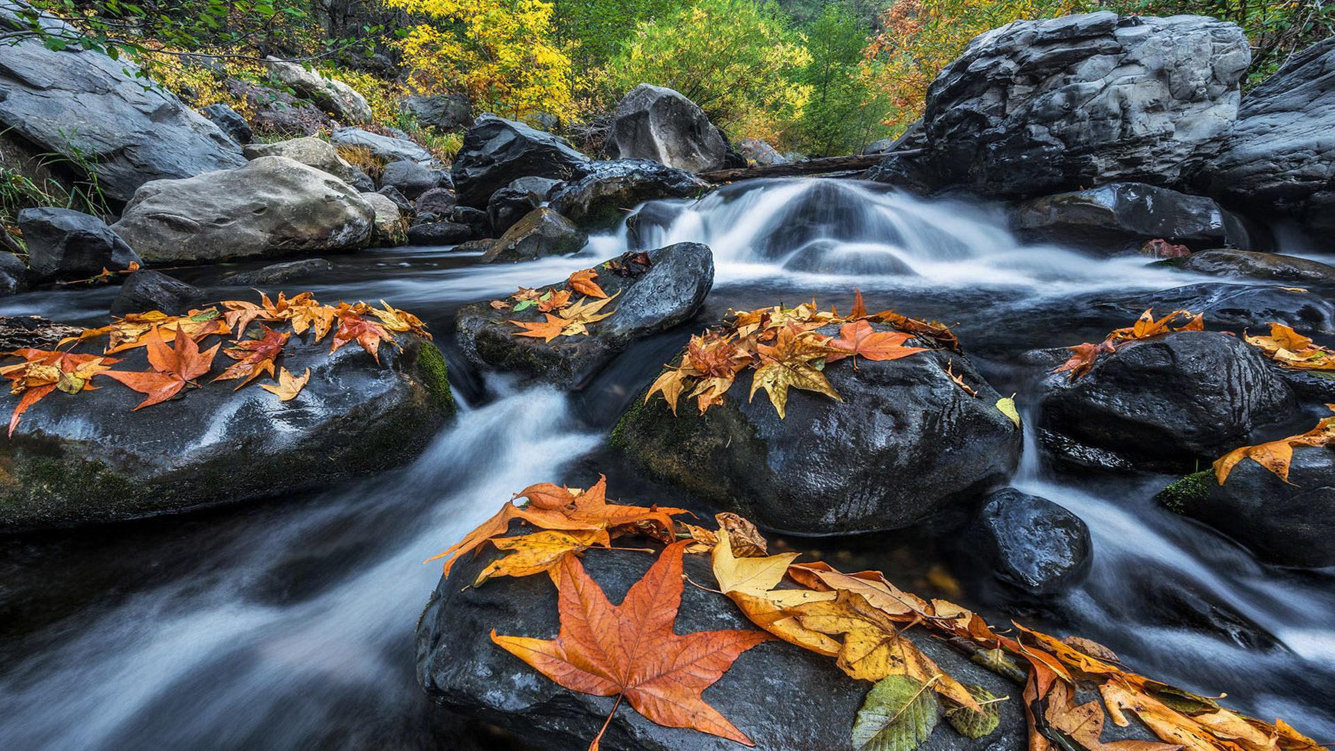 Fall Wallpaper Hd 1280x1024 River And Gorge Oak Creek Canyon In Northern Arizona