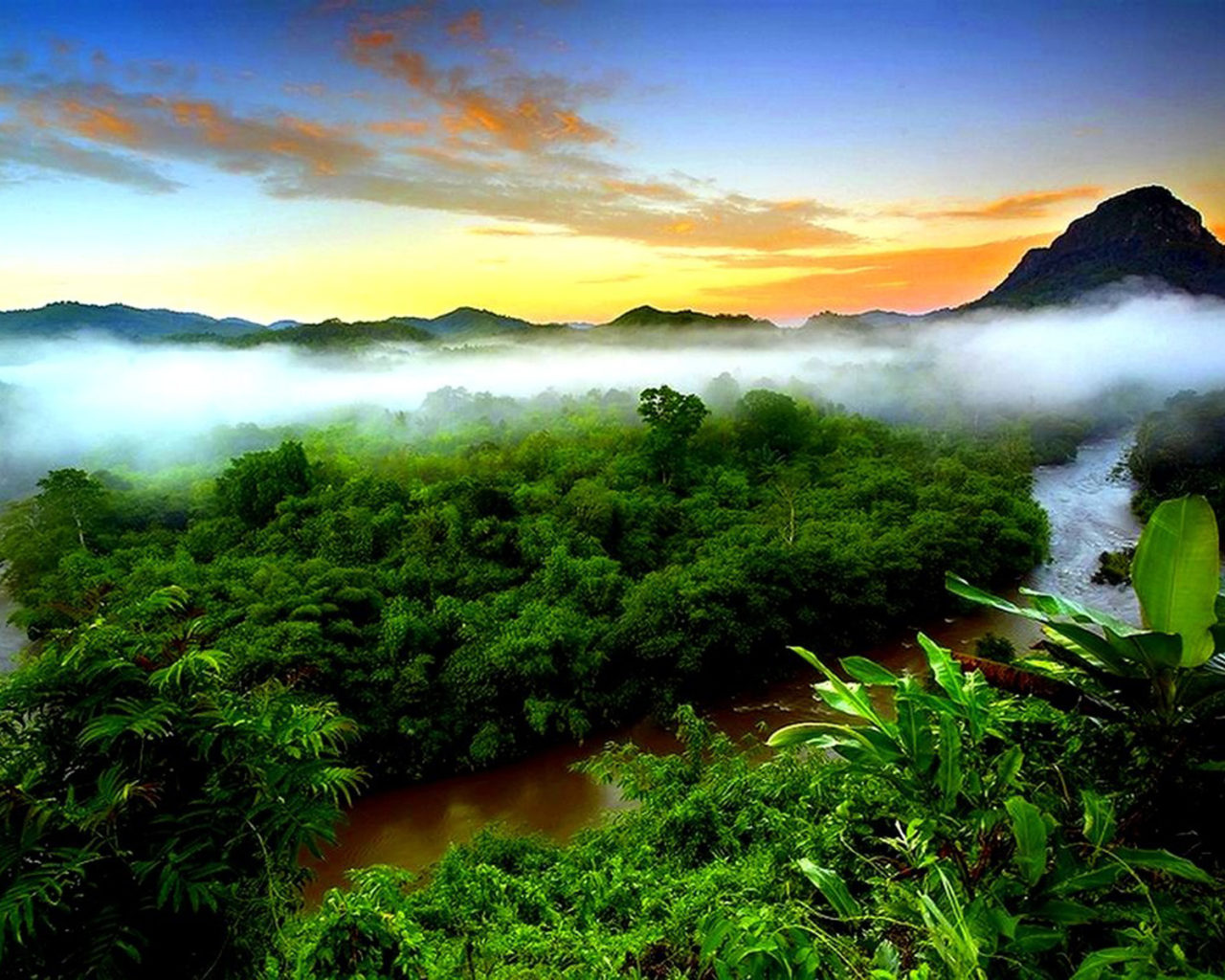 Wallpapers For Desktop Fall Colors Tropical Rainforest Mist Evaporation Green Forest Mountain