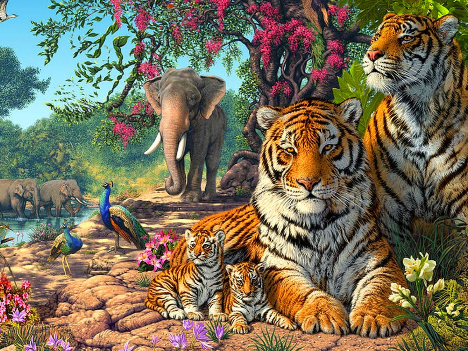 Wallpaper Hd For Desktop Full Screen Cute Tigers Family Exotic Birds Paun Elephants Jungle Nature Hd