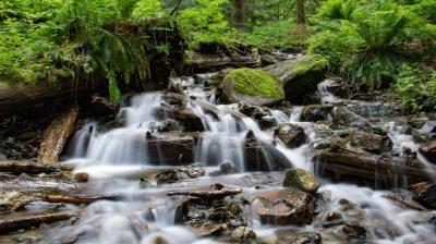 Cascade Stream Forest Water Rocks With Green Moss Green ...
