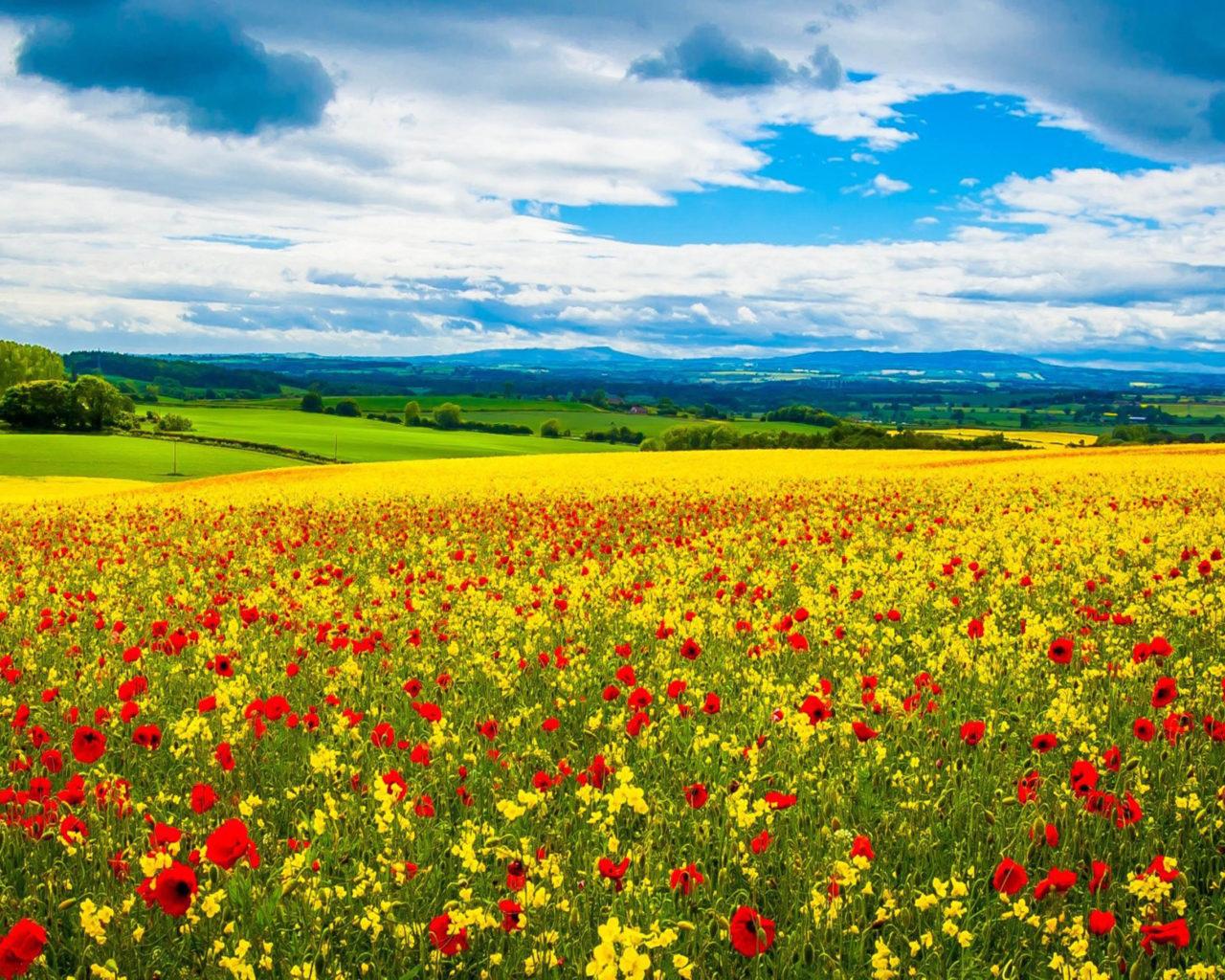 Falling Bridge Wallpaper Poppy Field Wild Flowers Spring Desktop Hd Wallpapers For