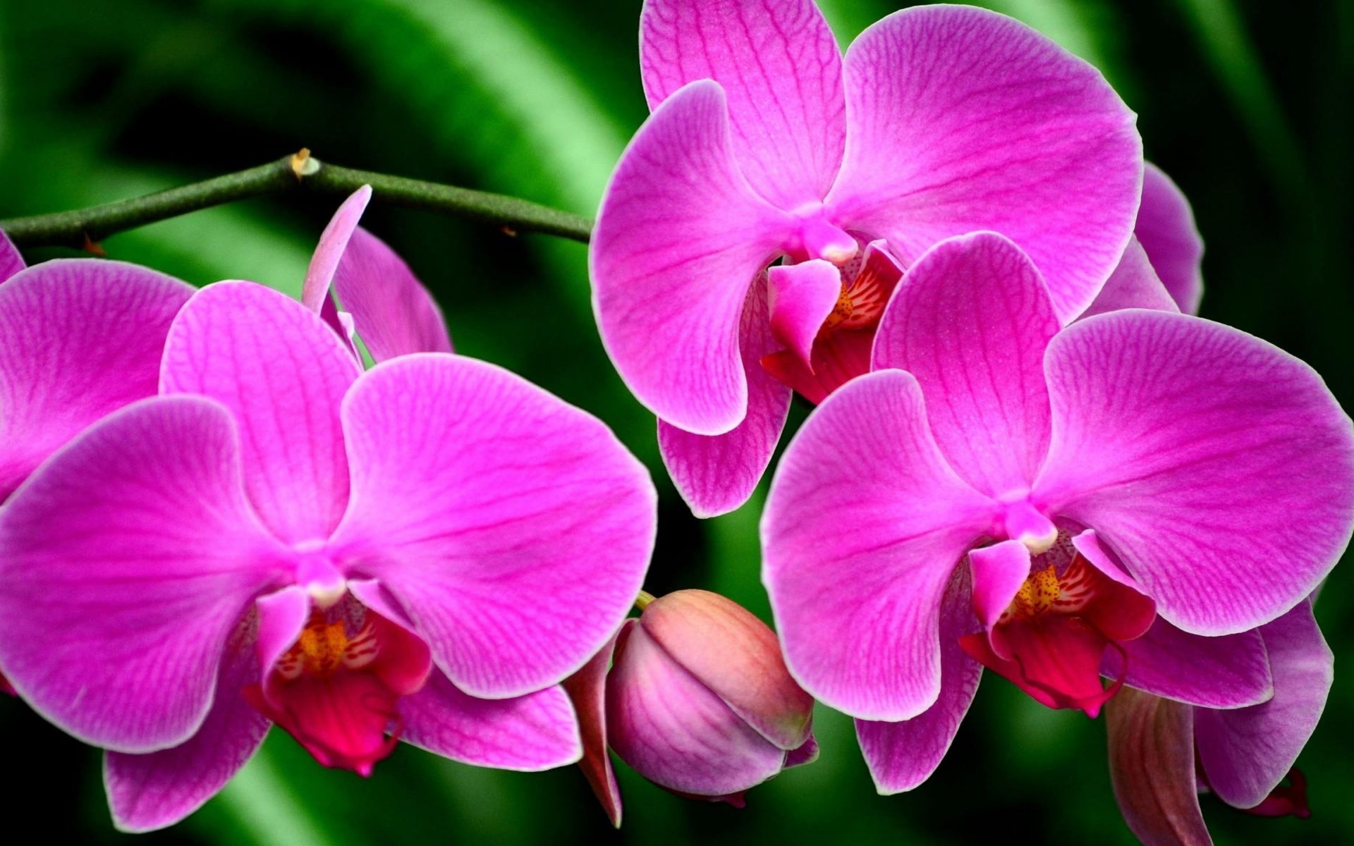 Purple Flower Orchids Exotic Flower Branch Ultra Hd Wallpapers For Mobile Phones Tablet And Pc