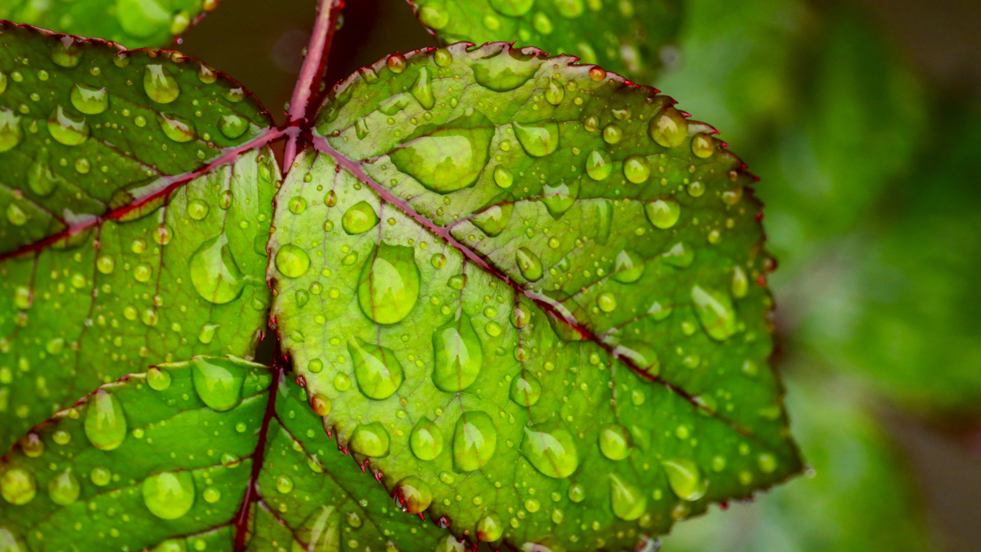 Water Droplets On Green Leaf 4K Ultra HD Wallpapers For Mobile Phones Tablet And PC 3840x2160