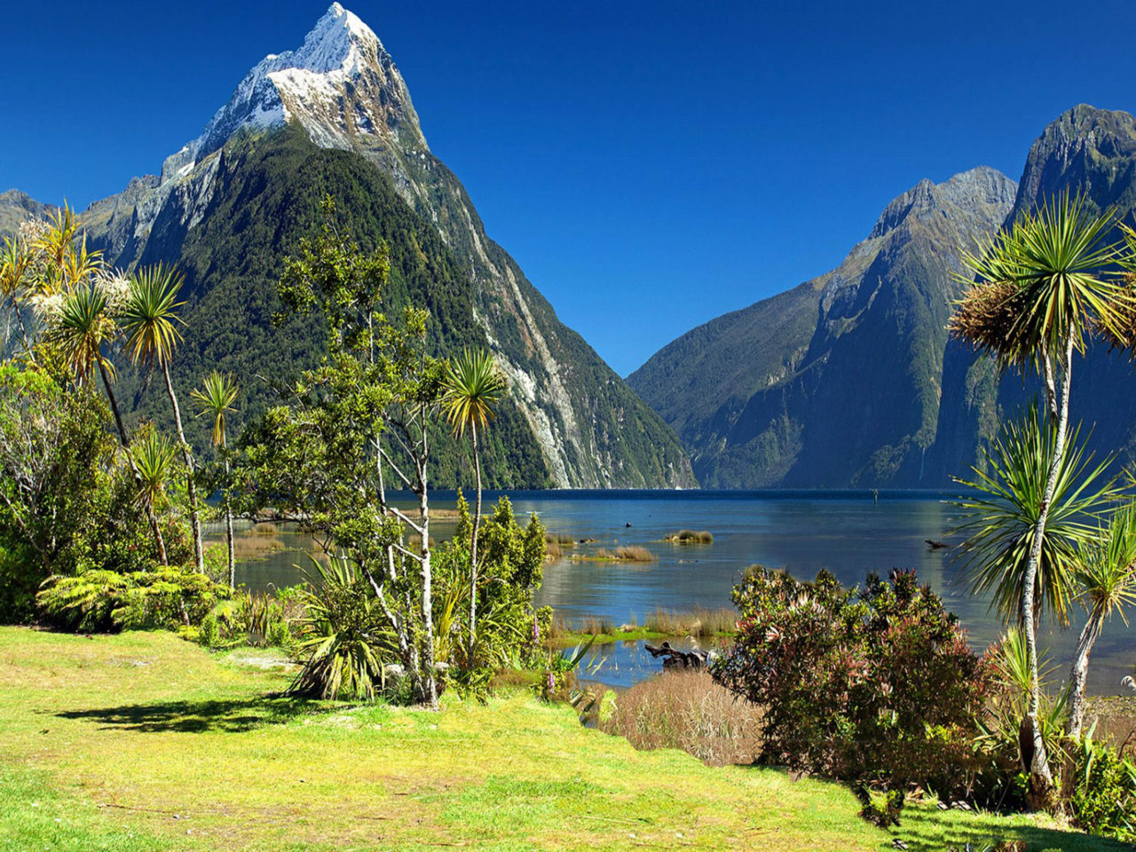 Miter Peak And Milford Sound Fiordland National Park New