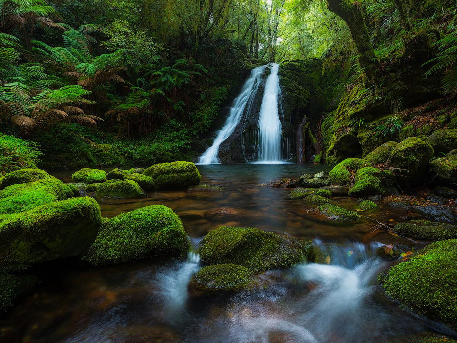 Disney Fall Desktop Wallpaper New England National Park Australia Rainforest Waterfall