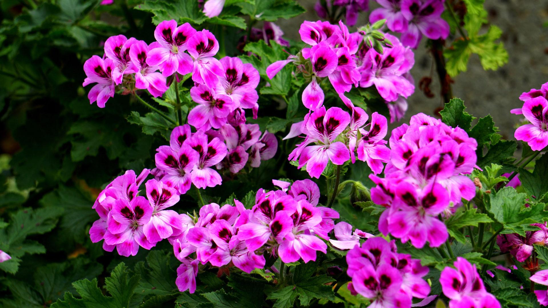 Cute Lock Screen Wallpaper For Ipad Flowers With Beautiful Pink Color Ultra Hd Wallpapers For