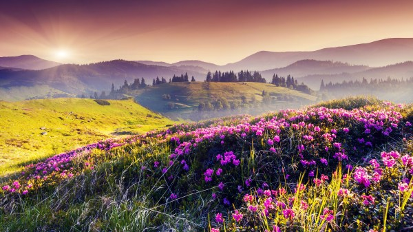 india valley of flowers national