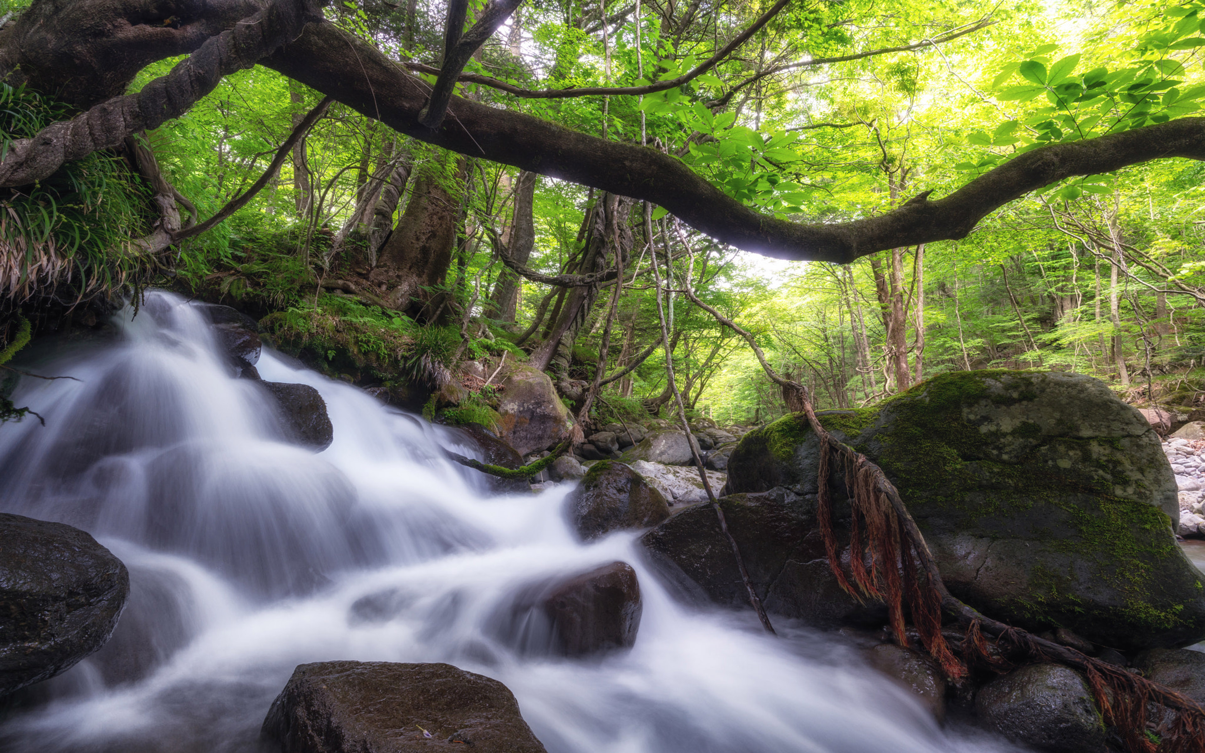 Spring Mountain Stream Rocks Water Forest Trees Roots